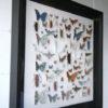 Framed Paper Entomology by Helen Ward 2