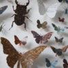 Framed Paper Entomology by Helen Ward 3