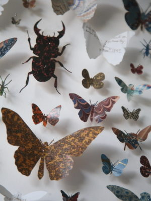 Framed Paper Entomology by Helen Ward 3