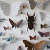 Framed Paper Entomology by Helen Ward 5